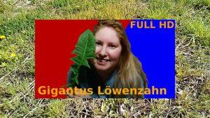 Erste Wildkräuter 2020 & Schuppenflechte