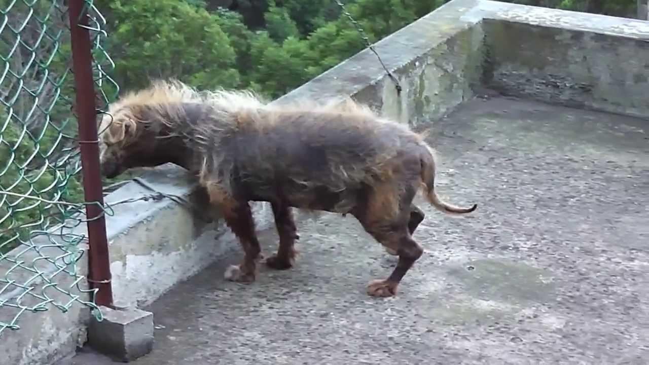 Ugly dog with psoriasis ( Hässlicher Hund mit Schuppenflechte )